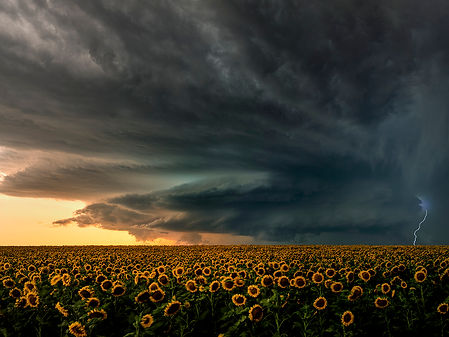 Cheyenne Wells Beastflowers.jpg