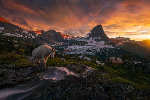Goat Crossing Fine Art Print