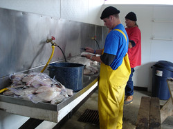 Fish House -Cleaning station