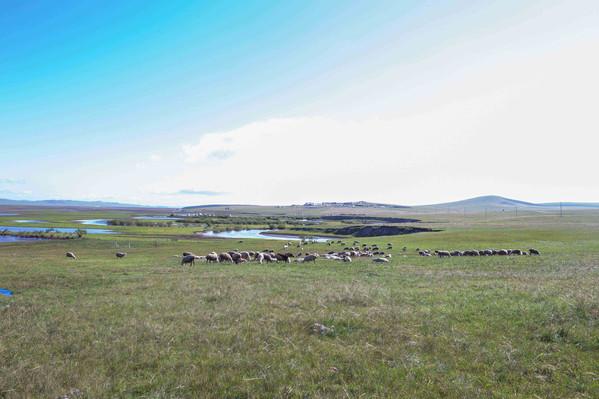 内モンゴルの草原