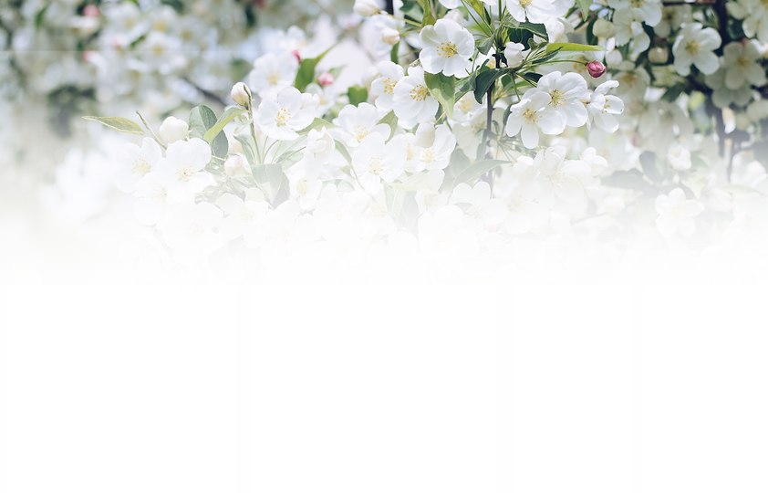 TopBlossons copy.png