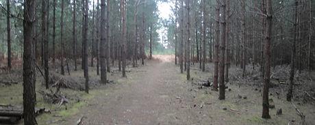 Woodpoint.jpg