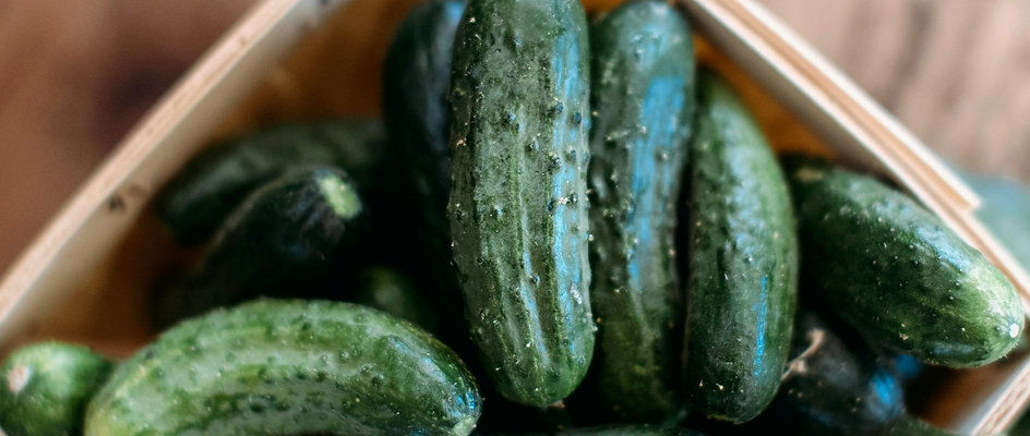 Pickling Cucumbers - 10lb Box