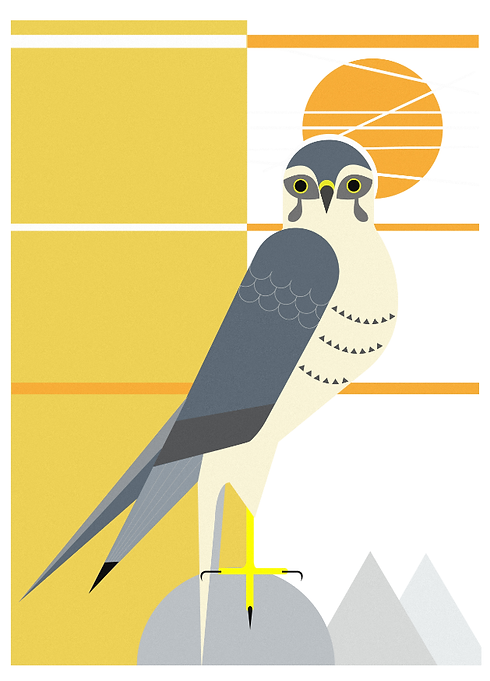 Peregrine Falcon.png