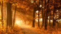 463049-nature-landscape-trees-forest-bra