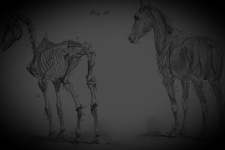 The_anatomy_and_physiology_of_the_horse-