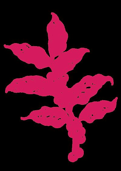 Botânico Café Suplicy Rosa