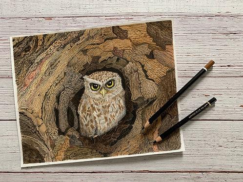 Tiny owl nesting in a tree