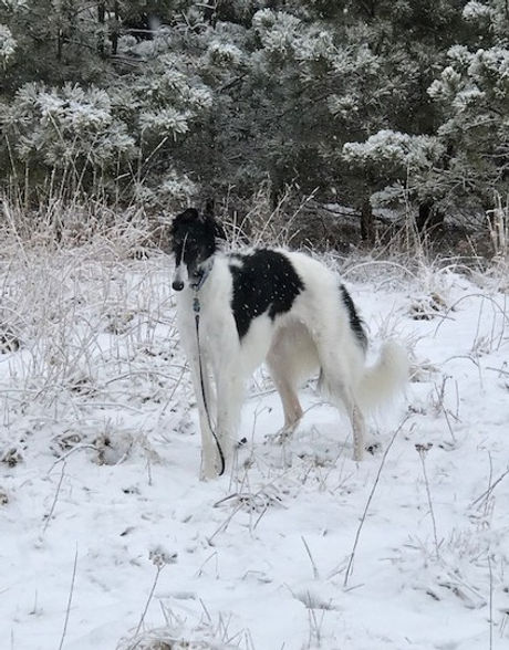 pandora snow_edited.jpg
