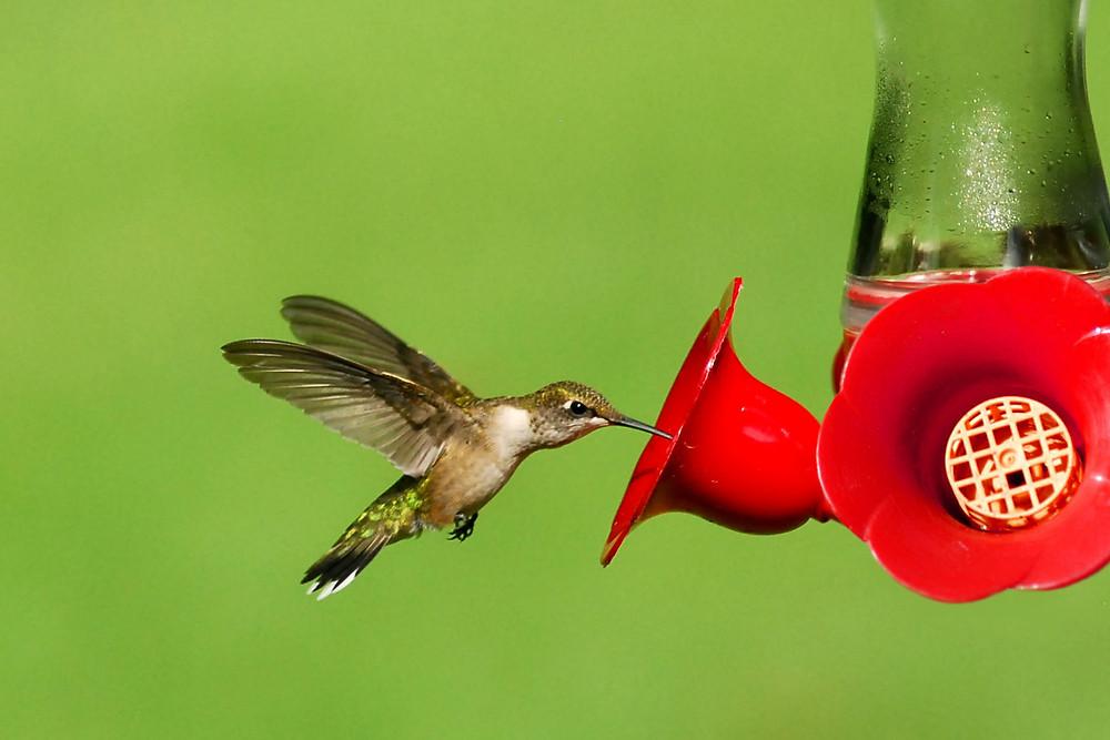 Hummingbird by S. Brunning