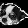 logo_tim-chappy.png