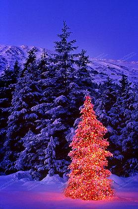 """Christmas Tree"" Photographic Print"