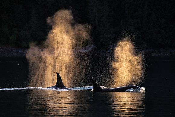"""Orca Dangerous Passage"" MetalPrint"