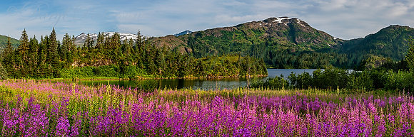 Shrode Lake Fireweed