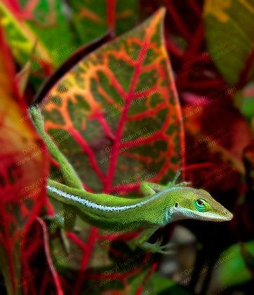 """Gecko"" Photographic Print"