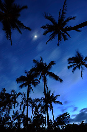"""Blue Hawaii"" Photographic Print"