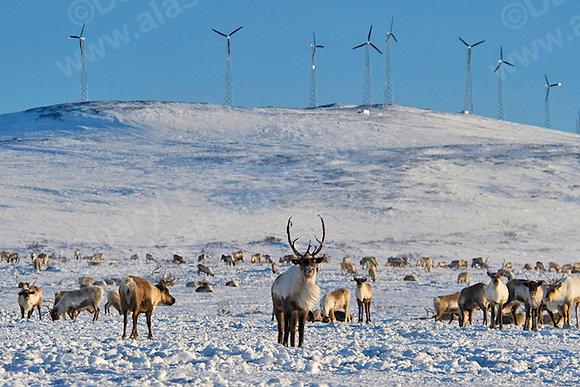 """""""Wind Farm"""" MetalPrint"""