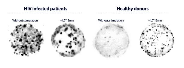 Bumpy cells.png