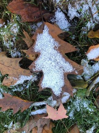 snow on fall leaves.jpg