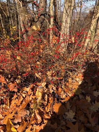 fall season.jpg