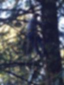 Tree Removal, tree limbing