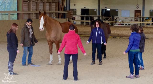 Le cheval choisi son praticien