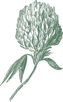 Inflorescence10.png
