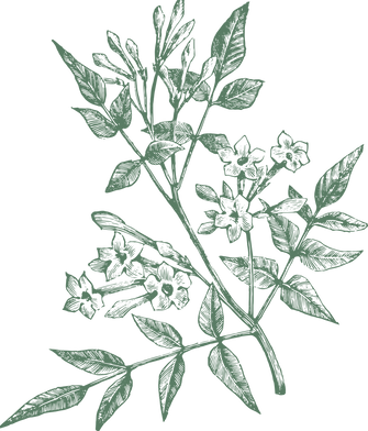 jasmine(transparent).png