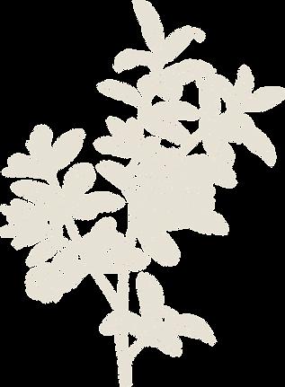 pomegranate_plant(transparent).png