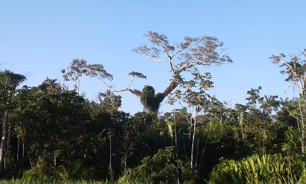 BR-364 ( Cruzeiro do Sul - Acre)