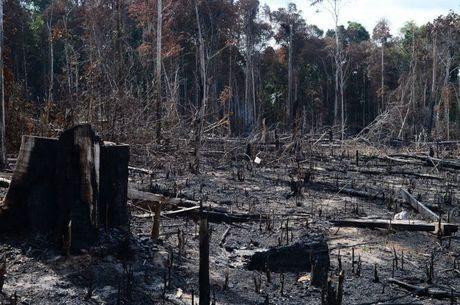Queimada na região de Rio Branco 2020 - Acre