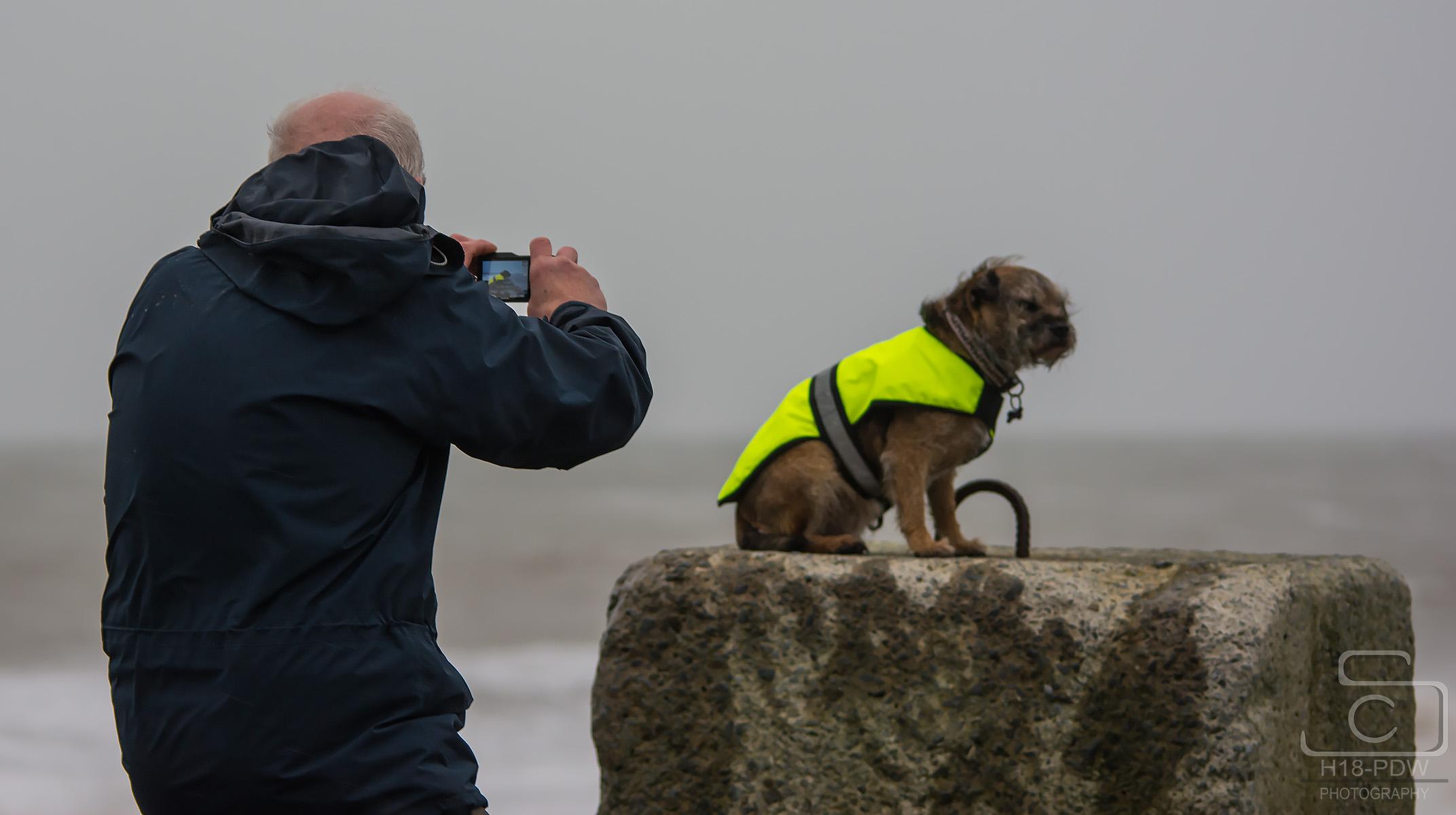 Dog Photo Aberystwyth
