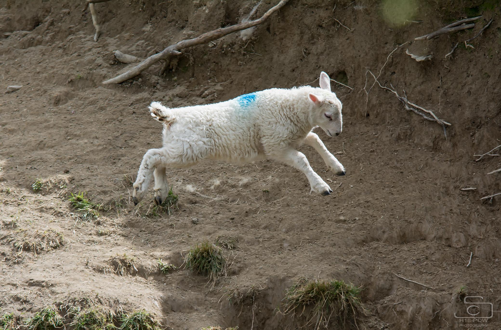 Lamb Big Jump
