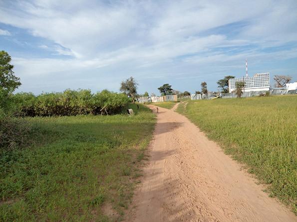 Le_chemin_de_l'usine_de_Mbèye3.jpg