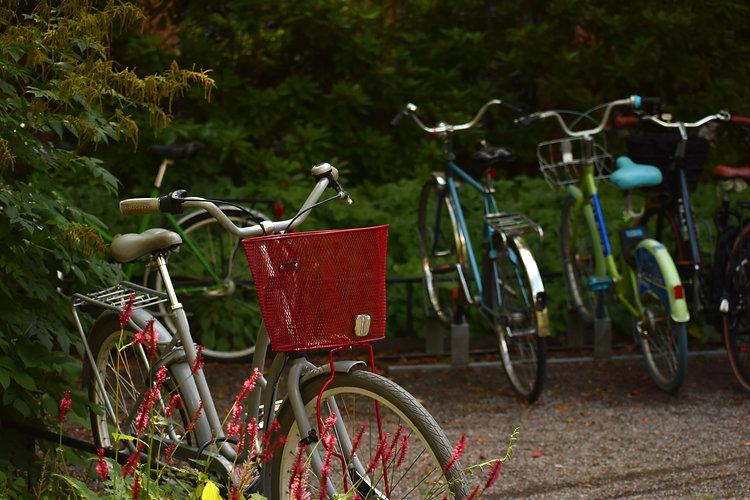 Bikes in bushes.jpg