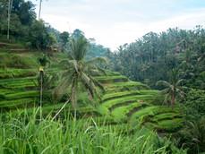 La magia de las terrazas de arroz de Tegalalang, Bali