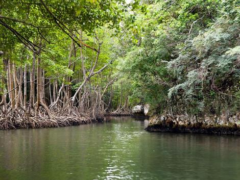 Cómo visitar el Parque nacional de los Haitises