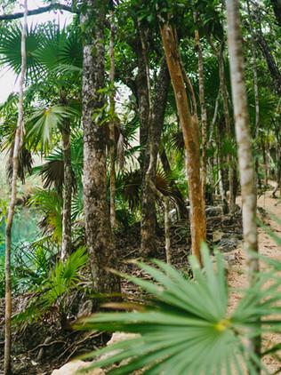 Cenote Escondido y Cenote Cristal, Tulum