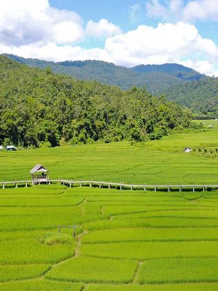 La auténtica Pai, perdida entre arrozales