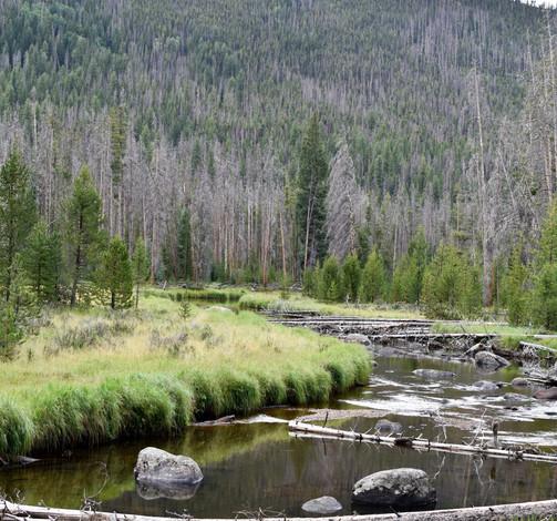 Stream along the trail to Cascade Falls