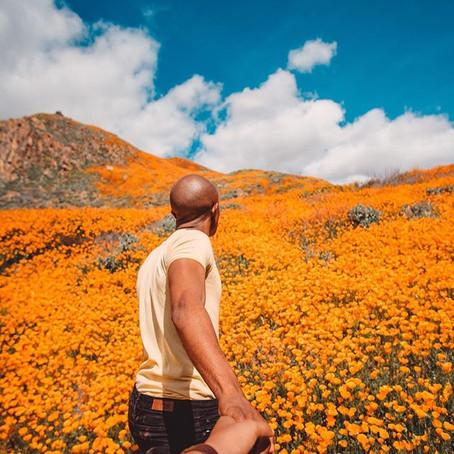Flower Power: Superbloom in Walker Canyon