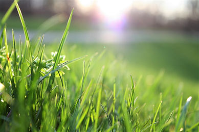 gardenminds Blick auf eine satte und grüne Wiese aus Perspektive aud fem Boden liegend