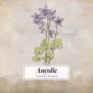 Ancolie_Cover_3000x3000.jpg