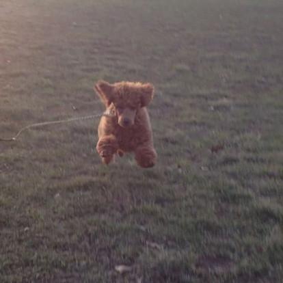 Pip's Flying Recall!