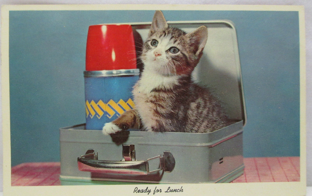 A tiny tabby kitten pops out from an old metal lunchbox.