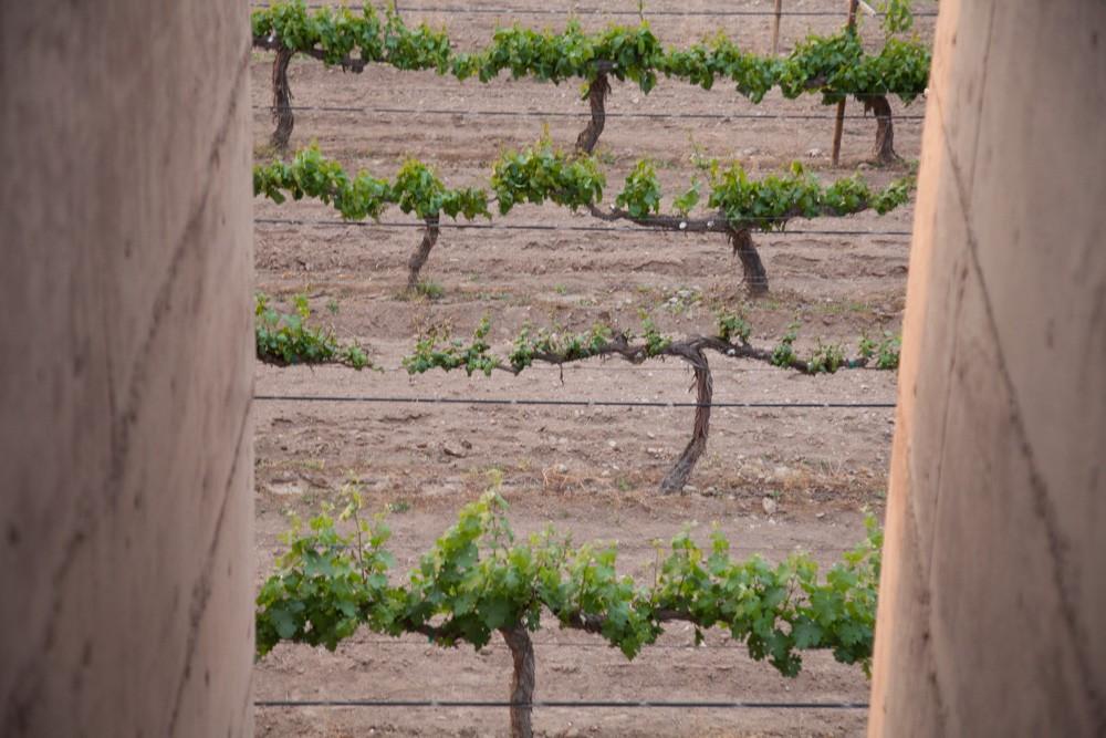Vista de los viñedos