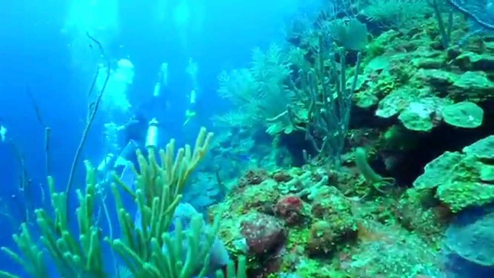 Arrecife en el Gran Hoyo Azul