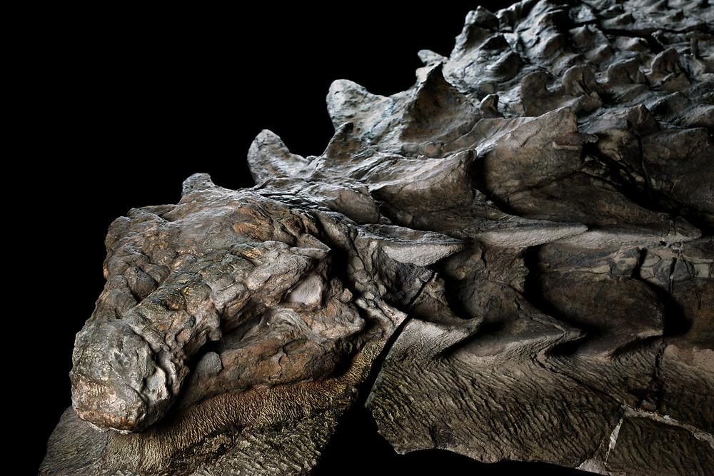 Fósil de dinosuario