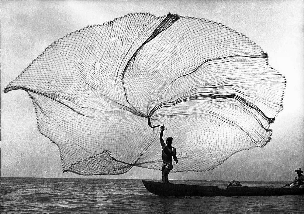Pavoreal de mar por Leo Matiz