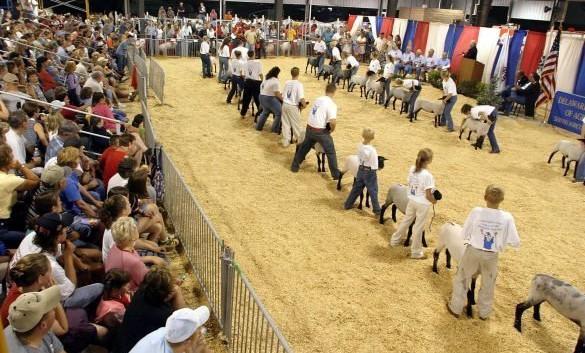 livestock4-1-585x375.jpg